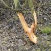 Chemisol repelenti obrana od kunića i zečeva